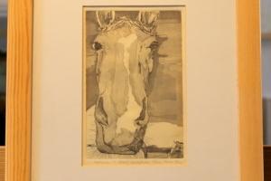 Hobune ofort 1986
